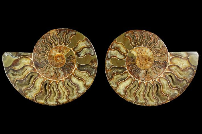"6.15"" Agatized Ammonite Fossil (Pair) - Crystal Pockets"