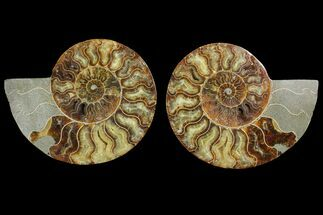 "6.85"" Agatized Ammonite Fossil (Pair) - Agatized For Sale, #144110"