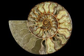 "10.2"" Agatized Ammonite Fossil (Half) - Madagascar For Sale, #145214"