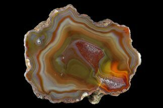 "Buy Colorful, 2.9"" Polished Condor Agate Section - Argentina  - #145528"