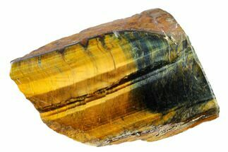 "3.1"" Polished Tiger's Eye Section - South Africa For Sale, #148256"