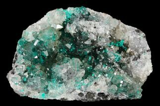 "2.1"" Dioptase Crystals on Quartz - Kimbedi, Congo For Sale, #148472"