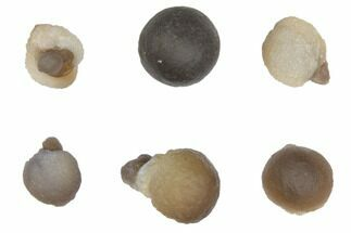 Small Spherical Chalcedony Nodules From Morocco For Sale, #149303