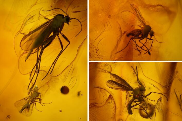 Three Fossil Flies (Diptera) In Baltic Amber
