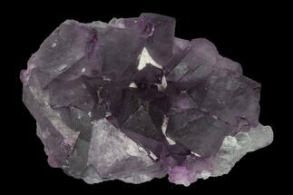 Fluorite - Fossils For Sale - #149658