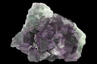 "3.3"" Purple-Green Octahedral Fluorite Crystal Cluster - Fluorescent! For Sale, #149666"
