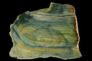 "5.4"" Gary Green Jasper (Larsonite) Bog Wood Slab - Oregon For Sale, #152115"