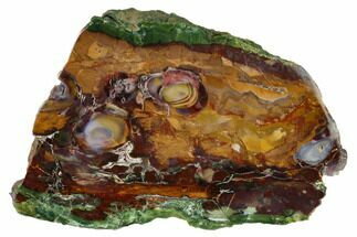 "Buy Colorful, 5.6"" Polished Purple Cow Jasper Slab - McDermitt, Oregon - #152140"