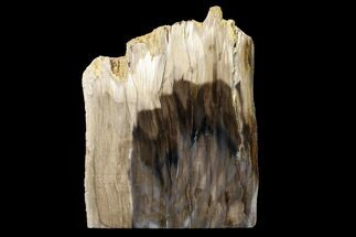 "4.8"" Polished, Petrified Dawn Redwood Stand Up - Oregon For Sale, #152387"