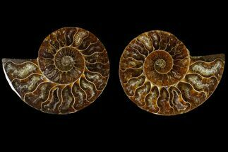 "2.8"" Agatized Ammonite Fossil (Pair) - Madagascar For Sale, #145916"