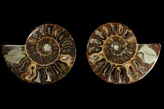 "Buy 2.8"" Agatized Ammonite Fossil (Pair) - Crystal Filled Chambers - #145933"