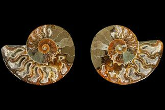"2.7"" Agatized Ammonite Fossil (Pair) - Crystal Filled Chambers For Sale, #145904"