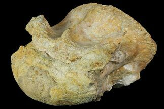 Spinosaurus sp.? - Fossils For Sale - #153492
