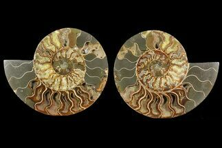 "Bargain, 9"" Cut & Polished Ammonite Fossil (Pair) - Madagascar For Sale, #148067"