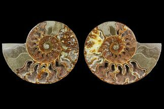 "Bargain, 5.6"" Cut & Polished Ammonite Fossil (Pair) - Madagascar For Sale, #148058"