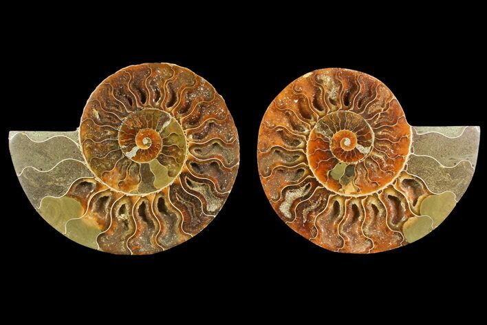 "4.4"" Agate Replaced Ammonite Fossil (Pair) - Madagascar"