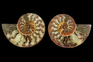 "3.9"" Agate Replaced Ammonite Fossil (Pair) - Madagascar For Sale, #150911"