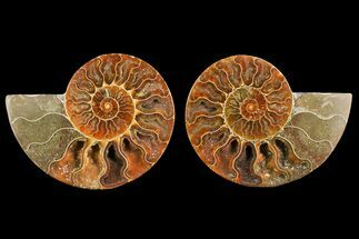 "4.9"" Agate Replaced Ammonite Fossil (Pair) - Madagascar For Sale, #150914"