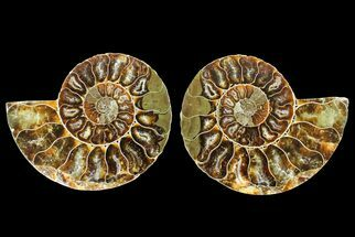 "2.75"" Agatized Ammonite Fossil (Pair) - Madagascar For Sale, #145988"