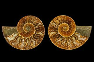 "2.6"" Agatized Ammonite Fossil (Pair) - Madagascar For Sale, #145994"