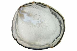 "Buy 6.3"" Polished Brazilian Agate Slice - #156313"