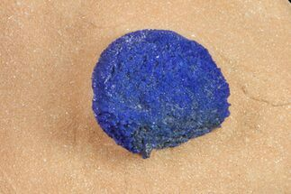 ".44"" Vibrant, Blue Azurite Sun on Siltstone - Australia For Sale, #155621"