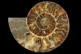 Cleoniceras - Fossils For Sale - #158013