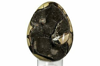 "Buy 6.55"" Septarian ""Dragon Egg"" Geode - Black Crystals - #157897"