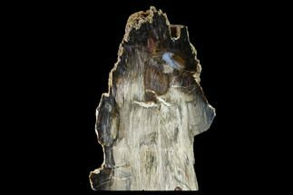 "6.7"" Colorful, Hubbard Basin Petrified Wood Stand-up - Nevada For Sale, #158921"