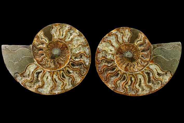 "5.45"" Agate Replaced Ammonite Fossil (Pair) - Madagascar"