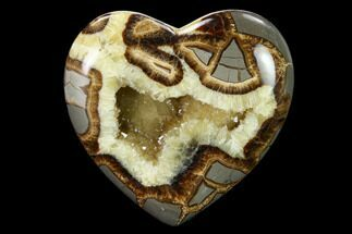 Septarian - Fossils For Sale - #160176
