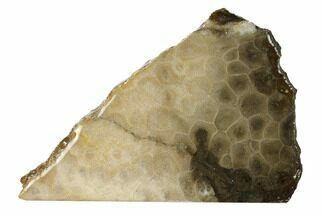 Hexagonaria percarinata - Fossils For Sale - #160266