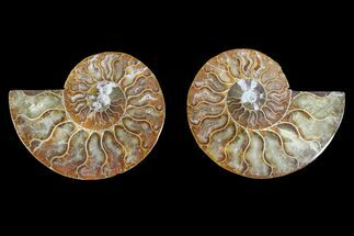 "Buy 3.4"" Agate Replaced Ammonite Fossil (Pair) - Madagascar - #145924"