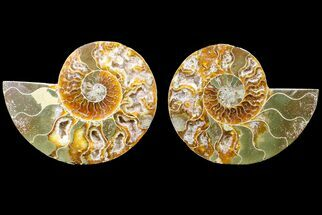 "Buy Bargain, 4.8"" Cut & Polished Ammonite Fossil (Pair) - Madagascar - #148015"