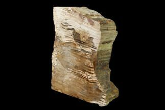"5.2"" Polished Petrified Wood Stand-up - Sweethome, Oregon For Sale, #162881"