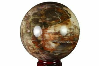 "Buy 3.7"" Colorful Petrified Wood Sphere - Madagascar - #163357"
