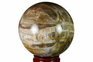 "Buy 4.15"" Colorful Petrified Wood Sphere - Madagascar - #163369"