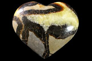 Septarian - Fossils For Sale - #156678