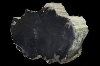 "Buy 6.5"" Polished, Black Petrified Wood Section - Arizona - #165964"