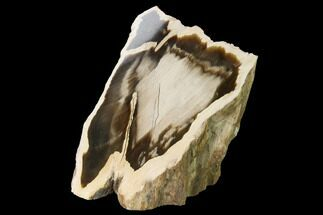 "Buy 4.4"" Petrified Wood (Sequoia) Stand-up - Rogers Mountain, Oregon - #166108"