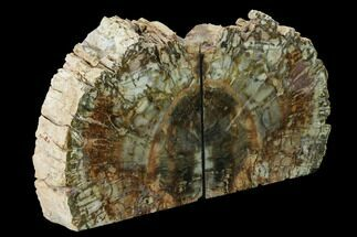 "6"" Tall, Colorful Petrified Wood Bookends - Madagascar For Sale, #166079"