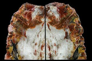 "Buy 8.6"" Tall, Arizona Petrified Wood Bookends - Red, Yellow & White - #166087"