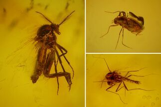 Three Fossil Flies (Diptera) In Baltic Amber For Sale, #166244