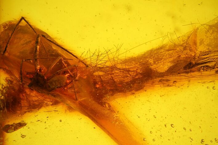 Fossil Mammalian Hair & Spider Preserved in Baltic Amber - Rare!