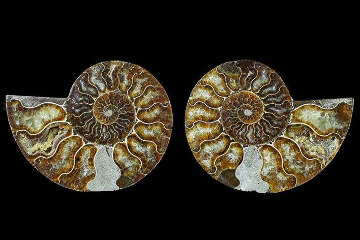 "4.3"" Agate Replaced Ammonite Fossil (Pair) - Madagascar"