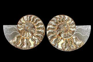 "Buy 6.6"" Agate Replaced Ammonite Fossil (Pair) - Madagascar - #166906"