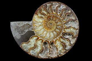 "6.6"" Cut & Polished Ammonite Fossil (Half) - Madagascar For Sale, #166913"