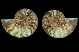 "5.3"" Agate Replaced Ammonite Fossil (Pair) - Madagascar For Sale, #166871"
