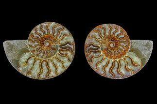 "Buy 6.1"" Agate Replaced Ammonite Fossil (Pair) - Madagascar - #166894"