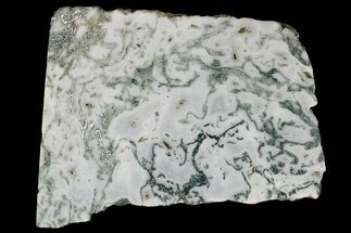 "Buy 4.7"" Polished Tree Agate Slab - India  - #167482"